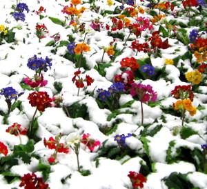 Snow_dream